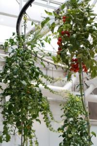 Garden Plant Care