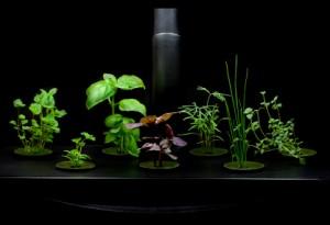 Variety of Organic Herbs Grown Under Lights