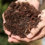 How To Compost At Home For Beginners