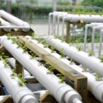 Hydroponic Gardening For Everyone And The World