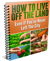 How to Live Off the Land Even if You've Never Left the City!