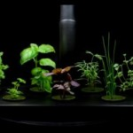 Hydroponic Lighting Tips