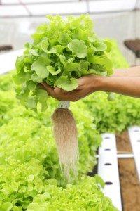 Hydroponic Gardening Help