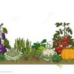 Time For Your Vegetable Garden Preparation