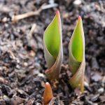 Garden Mulch Ideas for the Landscape