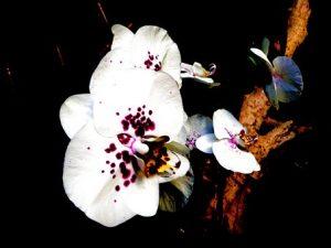 Butterfly Garden Design