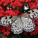 Butterfly Garden Design for Your Home