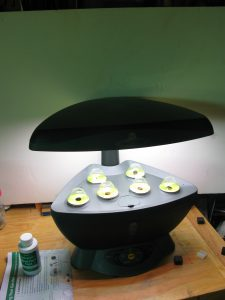 Working hydroponic system