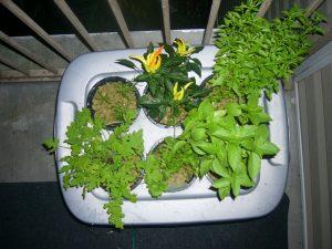 Easy Hydroponic Gardening