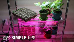 DIY hydroponic lighting