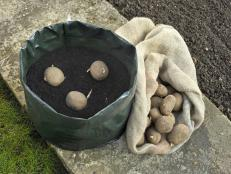 Grow bags for potatoes