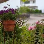 Cottage Garden Design Tips And Ideas
