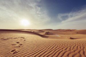sandy soil types